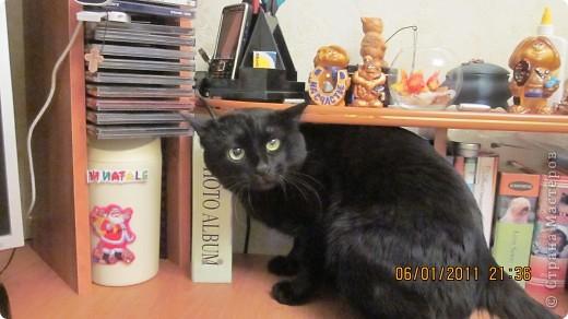 Мой кот!!!!  фото 6