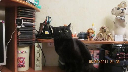 Мой кот!!!!  фото 8