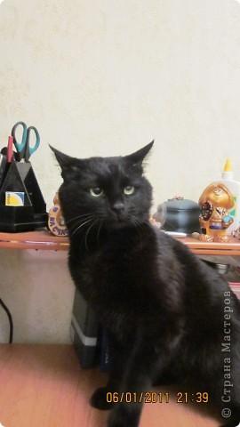 Мой кот!!!!  фото 9