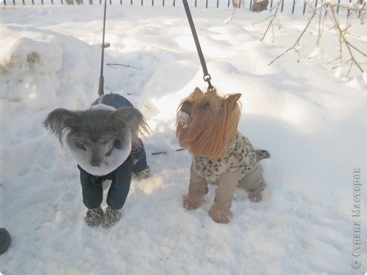 Разрешите вам представить двух модниц -ФиФочка(йорк) и Лёся(китайская хохлатая) фото 2