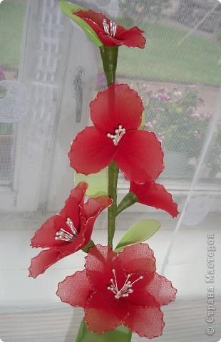 Такой вот странный, на гладиолус похожий, цветок у меня получился! фото 1