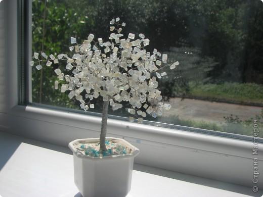 Дерево из лунного камня. фото 1
