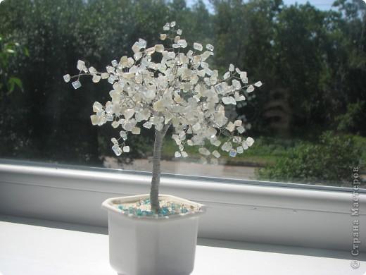 Дерево из лунного камня. фото 2