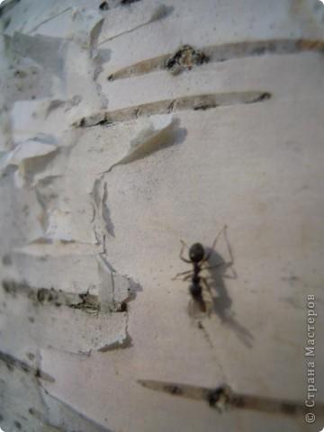 Бабочка красавица. фото 24