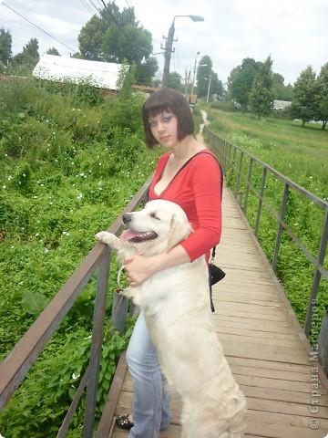 .Здравствуйте.Это моя красавица Шерри.(Армальд Революшен-по паспорту)с ней вы уже знакомы. фото 11