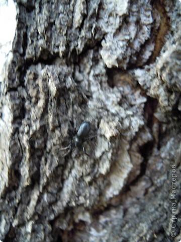 Бабочка красавица. фото 25