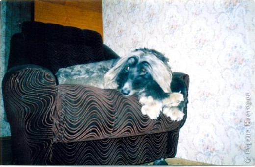 Спокойных снов тебе, собака! фото 7