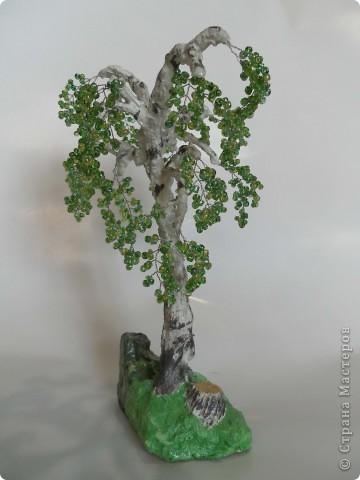 Денюжковое деревце фото 2