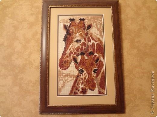 """Жирафы. Набор для вышивания """"Риолис"""" фото 1"""