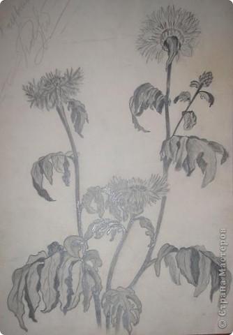 """Доброго времени суток, житери родной Страны! давненько я не появлялась - """"засосала хозяйственная рутина""""! Вот решила пока есть несколько минут, вытавить старые рисунки карандашом. Срисовано с открытки. Очень люблю эти цветочки. они мне напоминают меня - такие же цикличные в цветении, росте и покое. А еще это напоминание о моей бабушке. У нее зимой они очень буйно цвели - и это наверное единственное растение, которое я многие годы пыталась развести у себя - но, безуспешно. пока последний, подаренный мужем, на День св. Валентина, еще держиться, даже дал плоды - семены, которые успешно взошли и пока растут. фото 2"""