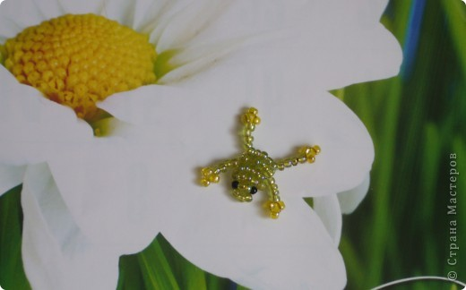 Лягушатки фото 3