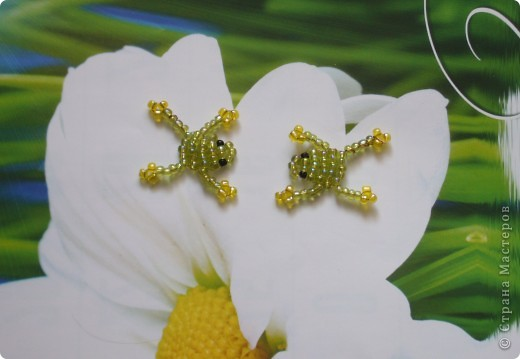 Лягушатки фото 1