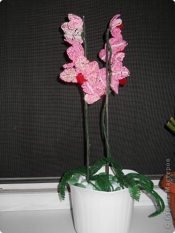орхидея розовая фото 1