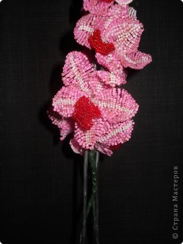 орхидея розовая фото 4