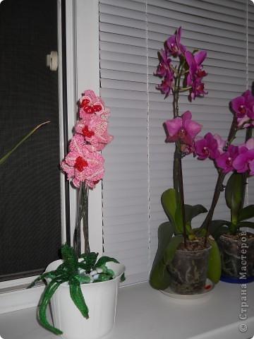 орхидея розовая фото 2