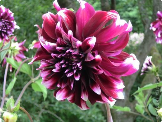 Мир цветов очень богат. Все они очень разные, но каждый по своему красив. фото 2