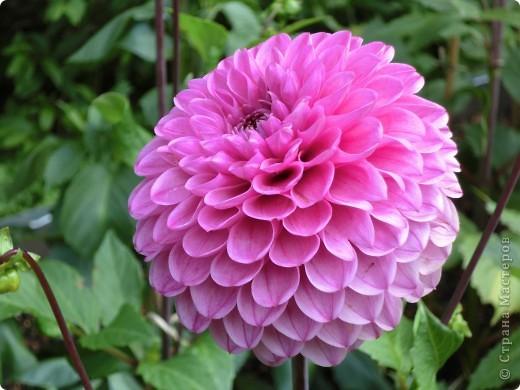 Мир цветов очень богат. Все они очень разные, но каждый по своему красив. фото 1