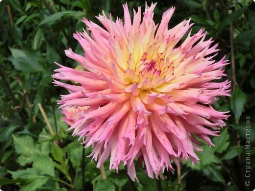 Мир цветов очень богат. Все они очень разные, но каждый по своему красив. фото 6