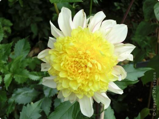 Мир цветов очень богат. Все они очень разные, но каждый по своему красив. фото 7