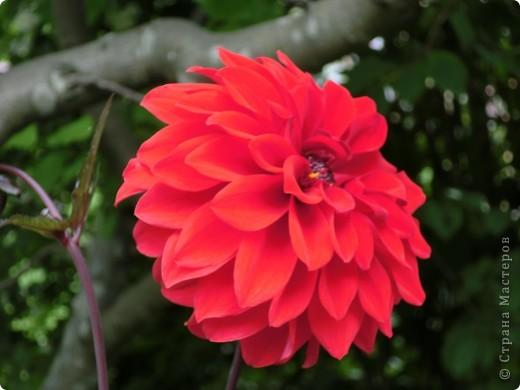 Мир цветов очень богат. Все они очень разные, но каждый по своему красив. фото 8