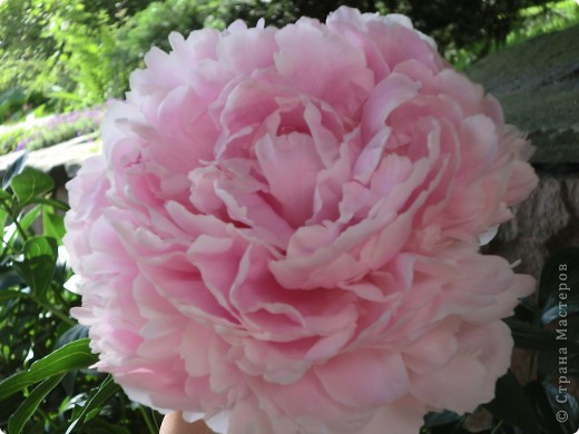 Мир цветов очень богат. Все они очень разные, но каждый по своему красив. фото 10