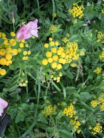 Сосны на обрыве.Весна. фото 21
