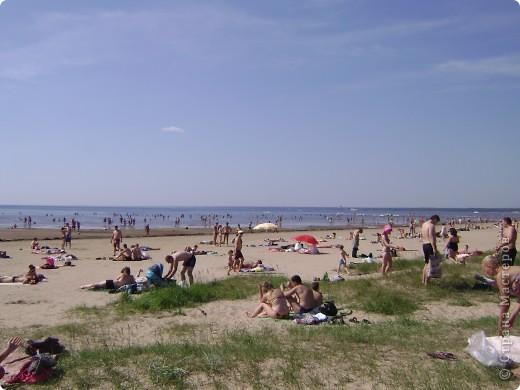 Наш любимый Сестрорецкий пляж.Как мне нравятся эти сосны! фото 3