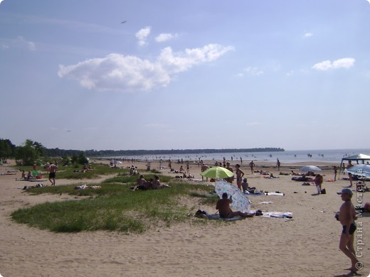 Наш любимый Сестрорецкий пляж.Как мне нравятся эти сосны! фото 2