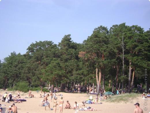 Наш любимый Сестрорецкий пляж.Как мне нравятся эти сосны! фото 1
