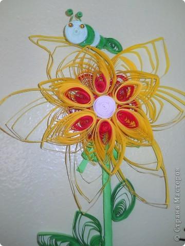 цветик фото 2