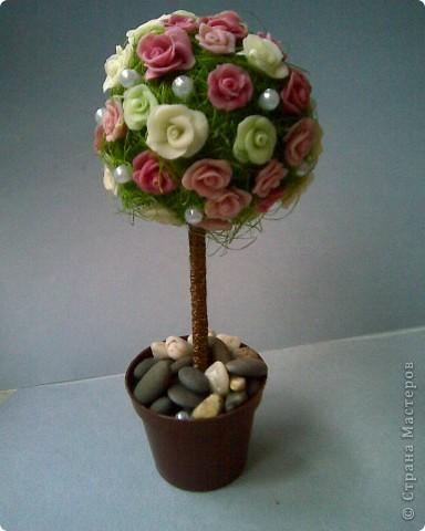 теперь и у меня есть розочковое дерево