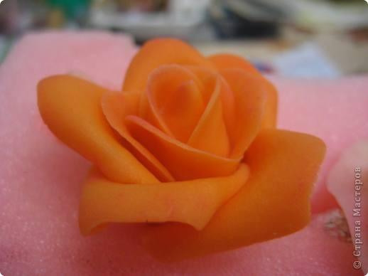 прибавила новые розы фото 10