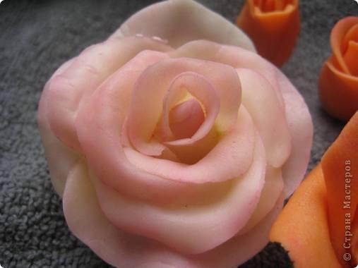прибавила новые розы фото 8