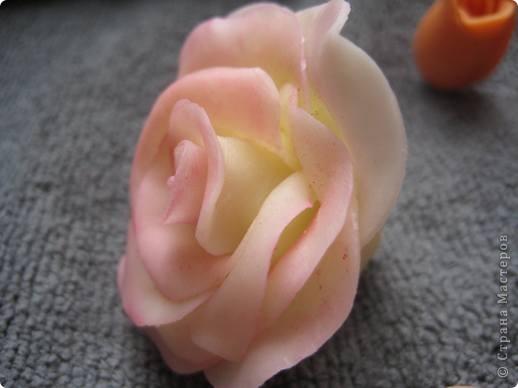 прибавила новые розы фото 9