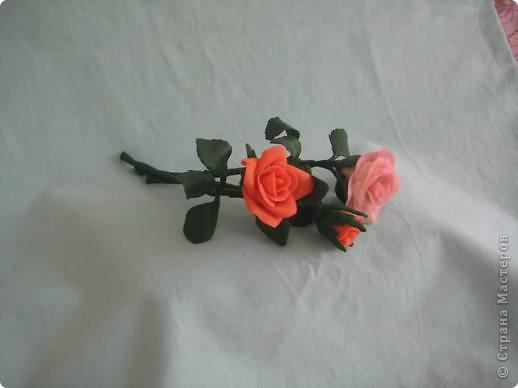 прибавила новые розы фото 19