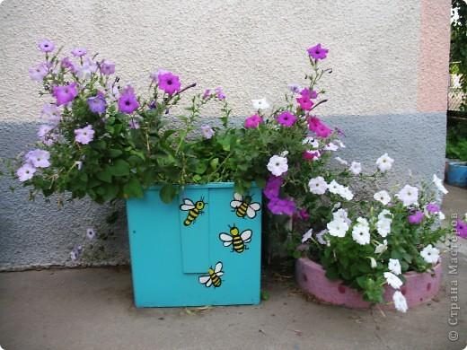 Приглашаю вас прогуляться по моему двору. Я очень люблю цветы .. Цветы растут у меня везде, где есть свободный кусочек земли. фото 6