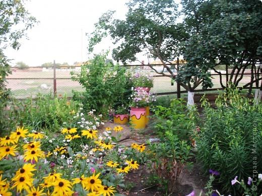 Приглашаю вас прогуляться по моему двору. Я очень люблю цветы .. Цветы растут у меня везде, где есть свободный кусочек земли. фото 10