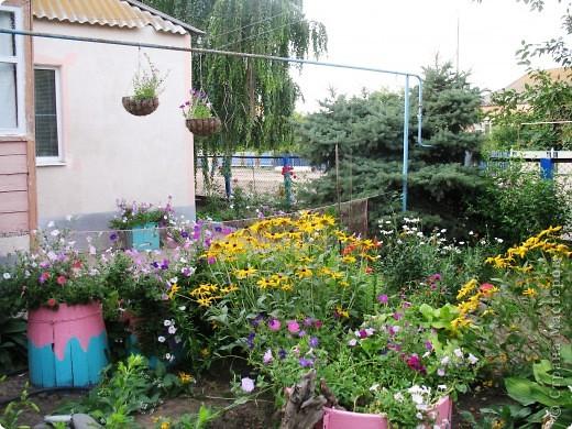 Приглашаю вас прогуляться по моему двору. Я очень люблю цветы .. Цветы растут у меня везде, где есть свободный кусочек земли. фото 1