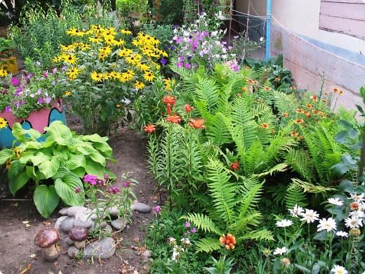Приглашаю вас прогуляться по моему двору. Я очень люблю цветы .. Цветы растут у меня везде, где есть свободный кусочек земли. фото 2