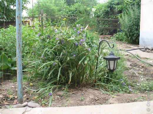 Приглашаю вас прогуляться по моему двору. Я очень люблю цветы .. Цветы растут у меня везде, где есть свободный кусочек земли. фото 13