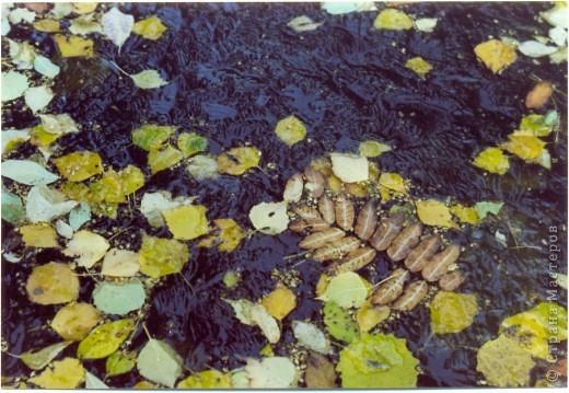 Сосны на обрыве.Весна. фото 28