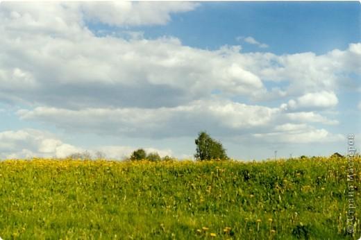 Сосны на обрыве.Весна. фото 26