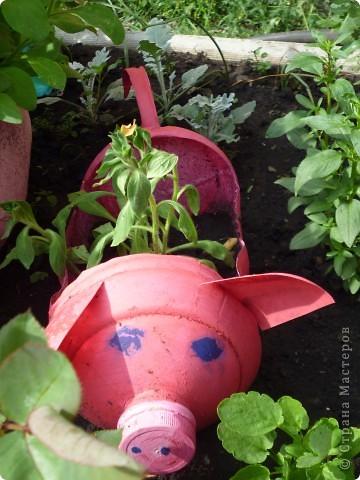 Свинка в огород фото 1