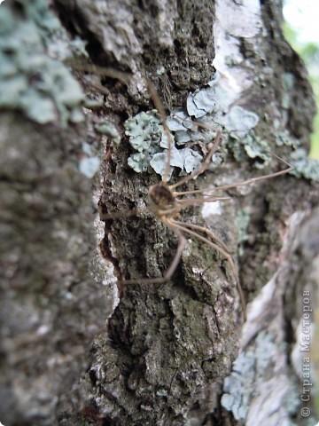 Бабочка красавица. фото 26