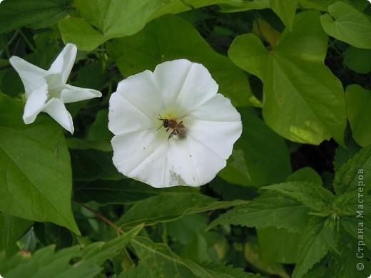 Бабочка красавица. фото 27