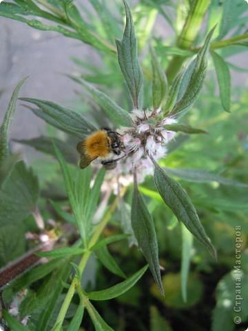 Бабочка красавица. фото 28