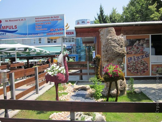 Забавные животные.Прогулки по Кишинёву. фото 2