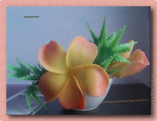 Плюмерия. Зелень искусственная. Цветочек из ХФ, крашен масляными красками. фото 1
