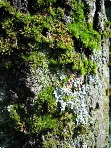 Сосны на обрыве.Весна. фото 12