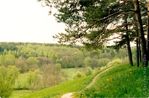 Сосны на обрыве.Весна. фото 33